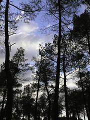 Contraluz 3 (Tere Duro) Tags: trees sky clouds contraluz lafotodelasemana arboles cielos negros azules tereduro lfscontraluces