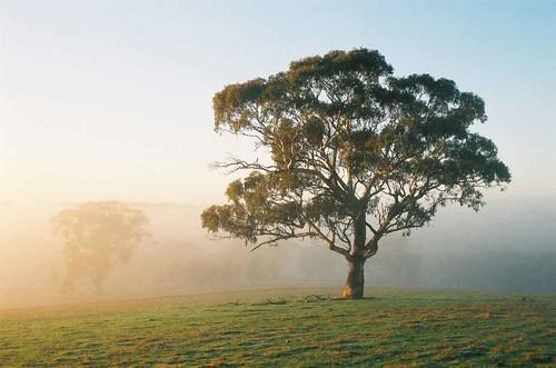 Tại sao lá mầm luôn mọc hướng lên trời và rễ cây thì luôn cắm xuống dưới đất?