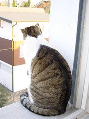Fusillo sul davanzale (*DaniGanz*) Tags: white cute window cat kitten tabby kitty finestra ledge windowsill gatto bianco micio cutecatphotos davanzale fusillo catsandwindows tigrato daniganz