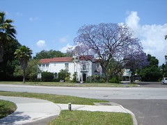 Jacaranda in front of Spanish style home (editengine~) Tags: tampa jacaranda davisisland