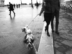 walk on a holiday (motocchio) Tags: bw dogs monochrome walking streetphotography piazza trieste decisivemoment magnumesque explored top20street 123bw pasqua2006 top201