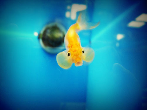 muoh! -- water fish muoh