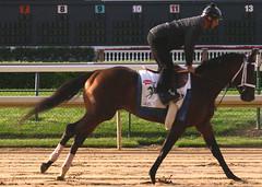 Jazil gallops (horsestohorsepower) Tags: horseracing oaks derby churchilldowns kyderby dawnatthedowns kyoaks morningworks
