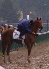 Lawyer Ron (horsestohorsepower) Tags: horseracing oaks derby churchilldowns kyderby dawnatthedowns kyoaks morningworks