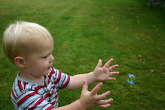 Chasing after a bubble (Jenni Reynolds-Kebler) Tags: childhood carson child bubbles 100views 500views littleboy weeklysurvivor age2 75points i500 fourfavs