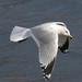 George Gull Photo 3