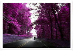 Dream Forest Rider (noushin photography) Tags: pink trees bike landscape v100 pennsylvania pa motorcycle topv777 s1 rider buckscounty v50 set1 333v3f topvaa botopv0207