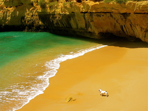 DODO`S BEACH by *mary gold*.