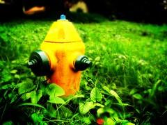 (wakalani) Tags: city green yellow hydrant lomo olympus outoffocus amarillo saturation vistas hidrante birdsill birdsillsociety wakalani masvistas utatafeature utatacolorblack