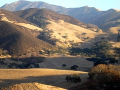 Mt. Diablo-Walnut Creek, CA (m krause) Tags: california ca foothills mountain tree fall nature grass northerncalifornia landscape oak suburban clayton hill mining m hills wc liveoak mines minerals bayarea eastbay diablo openspace walnutcreek mtdiablo grassland oaktree grasslands krause valleyoak mountdiablo contracosta contracostacounty blueoak limeridge baynature megankrause mkrause mkrausephotography megankrausephotography wwwmegankrausecom