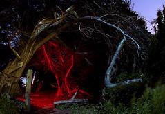 An Invitation to the Woods (ec808x) Tags: sanfrancisco longexposure nightphotography trees night d50 painting woods nikon flash creepy fisheye spooky moonlit bayarea paintingwithlight sutro moonlight paintwithlight 105mmf28 ec808 sutroruins