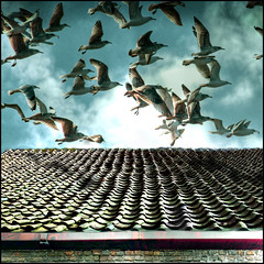 GETAWAY PUZZLE 3 (ESOX LUCIUS) Tags: holland rooftop photoshop play albaluminis gulls ivan puzzle roquentin taco hdr nowwhat interestingsnessmay82006145 fivestarsgallery fsganimals