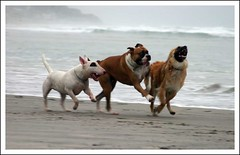 Three Dog Race