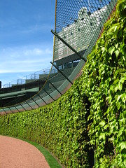view from the ivy (mikepix) Tags: chicago print baseball ivy cubs wrigley scoreboard