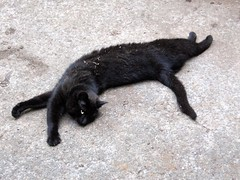 Thirteen the Black Cat Stretching Way the Heck Out (Pixel Packing Mama) Tags: cats thanks wow catwomen wonder fromabove mycats excellent greatshot catsandkittensset catscatscats ilovemycat furryfriday nuggets catsdogs cutecat blackcats allanimals luckylegs walkonthewildside petsinprofile catlovers petparade flickrcat notmycat beautifulcats bigstretch happycats playfulcats crazyanimals familyfurrythingsorboth catpix pixelpackingmama meowscollector catssmalltobig dorothydelinaporter views300 worldsfavorite cameraactionornotastilllife everybodywantstobeacat canonpowershota510a510 notmypet blackcatbrigade wowphotos anythingallowed ourcatcompanions melfanclub somebodyelsescat catsworld fotocats welovelatte wonderfulunlimited cc300 cc200 walkonthewildsidecats tobysgroupies catcentury ourbelovedcats catsanddogsfromaroundtheworld solarpoweredcats justmoggies 300viewsnomorethan499 acatslifedogsorothers catscookiecatfriends furryfun favoritedpixset mostinterestingaccordingtoflickralgorithmset blackcatkizzy theoneblackcatpool wronglysetneedtobemoved pixelpackingmama~prayforkyronhorman oversixmillionaggregateviews over430000photostreamviews