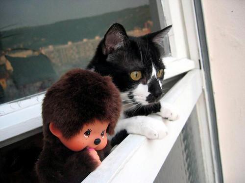 Le chat et moi (Part II) par Vert Monkey (Kiki)