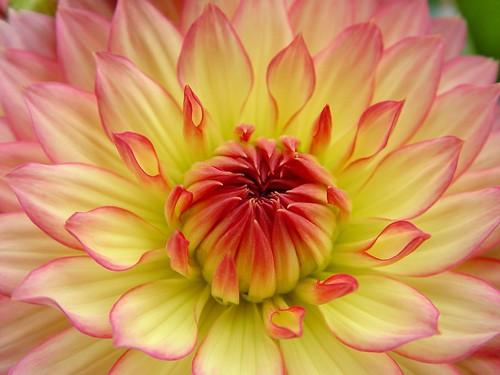flame blossom