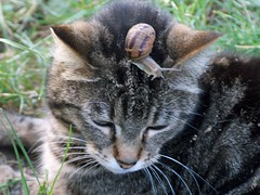 Animal friendship 2 (Renzo Ferrante) Tags: world nature animal cat ilovenature lumaca gatto amicizia animali frienship mondo animalfriendship 100vistas dailyvip challengeyouwinner p1f1 flickrchallengegroup renzoferrante