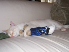 GO MAVS! (thubbardbebe) Tags: bear cute sports cat fan kitten go mavs