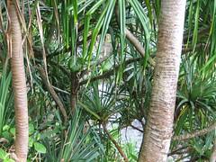 IMG_3915 (sygyzy) Tags: vacation green hawaii kauai hanaleibay