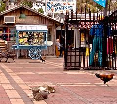 Fabulous Key West (key lime pie yumyum) Tags: cats chickens delete10 delete9 delete5 delete2 delete6 delete7 save3 delete8 delete3 delete delete4 save save2 save4 keywest mallorysquare flipflopcart