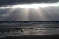 Northsea beach (imanh) Tags: sea imanh iman heijboer seagull sky sun rays noordzee lucht hemel zon zonnestraal zee strand sunray beach northsea