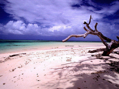 Laura beach n' tree