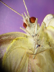 Ventral View Of Butterfly (jwinfred) Tags: macro nature face mississippi eyes insects delta buttterflies