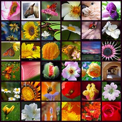Turquoise's mosaic - 23 juin 2006 (Turquoise Bleue) Tags: pink blue friends red green yellow fdsflickrtoys purple friendship mosaic turquoise mosaics artists tableau amiti impressionisme flickrs flickrsfriends turquoisebleue turquoisesmosaic promoteartists friendshiparoundtheworld afantasticstory amititraverslemonde