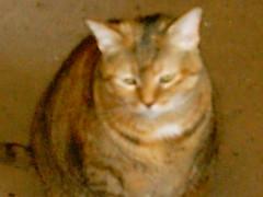 IMAG0111_0094 (amydoll1477) Tags: cats teaser
