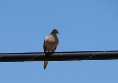 bird birdonawire movietitle
