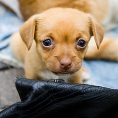 Little boy (Reportergimmi) Tags: dog cane puppy homeless cucciolo vagabond cagnolino