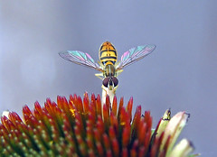 ?---Hover Fly---Thanks Everyone! : )