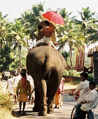 Temple Elephant - Kerala (FabIndia) Tags: india near kerala kollam backwaters