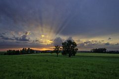 Look this sunset! (m_haefeli) Tags: trees light sunset sky sun sunlight tree green grass clouds landscape schweiz switzerland nikon sonnenuntergang suisse angle wide wiese himmel wolken wideangle stunning gras grn blau landschaft sonne bume baum sonnenstrahlen oberhausen sunbeams weitwinkel 7000 thurgau strahlen braunau 7k tobel 1024mm d7000 unnin nikond7000