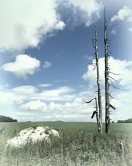 Lightning Rod (Doyleecart Photography) Tags: blue sky white tree green clouds rod lightning topaz mendip sigmalens canon5dmkii doyleecart