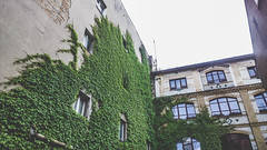 Poznan, Poland (dandi723) Tags: windows summer building architecture buildings nokia outdoor poland polska ivy microsoft 1020 pozna poznan architektura dng lato wielkopolska lumia bluszcz nokialumia nokia1020 lumia1020 shotonmylumia microsoftlumia
