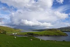 ECOSSE (michel_sarthe) Tags: skye nature de ile nuage circuit moutons ecosse