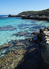 Rottnest  coast Vertical