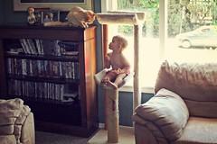 Tradesies? (KaseyEriksen) Tags: boy baby silly cat kitten feline funny child kitty grandson playful