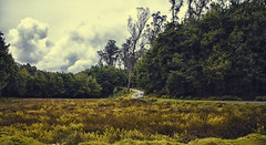 Kodai (Prabhu B Doss) Tags: travel india grass forest landscape photography nikon wideangle kodai hdr tamilnadu kodaikanal sigma1020mm d80 prabhubdoss