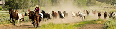 ahead of the herd - explore (Marvin Bredel) Tags: ranch horse action running explore wyoming dust marvin jacksonhole grandtetonnationalpark trianglexranch bredel
