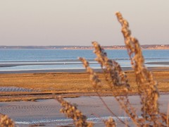 fullsizeoutput_ded (ericssonbo24) Tags: d beach winter sunset evening seagrass water sky colors