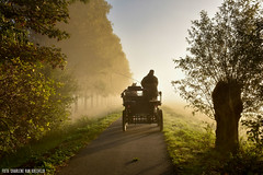 On a Sunny Sunday Morning (Charlene van Koesveld) Tags: carriage horses horse animals mist misty fog foggy sunrise sunlight sun road golden goldenhour dutch holland netherlands nederland tree trees landscape nature man dog animal light yellow morning sunday sunny schipluiden south zuidholland street path dense travel vehicle