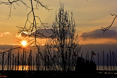 Silhouettes squelettiques (Diegojack) Tags: paysages hiver froid glace lever soleil soleilmatinal silhouettes arbres port petitbois morges contrejour