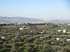 Olive groves and houses, from railway between Meknes and Fez, Morocco (Paul McClure DC) Tags: morocco fez almaghrib dec2016 scenery fèsmeknèsregion