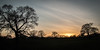 Boxing Day Sunset (Sara@Shotley) Tags: sillouette sunset flintshire wales trees black winter sky cloud