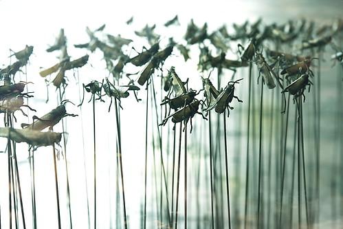 Çekirge ordusu - Grasshoppers