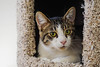 Russ - FFF (Light Echoes) Tags: sony a6000 2016 winter forgottenfelinesandfidos cat chat kot gatto feline pet katze kat kalo котка gato gate gat animal 고양이 γάτα kočka 貓 القط kass kissa חתול बिल्ली miv macska kucing 猫 vighro kaķis katė qattus katten گربه pisica кошка mačka katt แมว kedi кішка بلی mèo cath rescue shorthairdomestic tabby russ