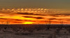 Surreal Sunset (http://fineartamerica.com/profiles/robert-bales.ht) Tags: desert fineart flickr land landscape photouploads sunsetorsunrise sunrise sunset redsky sunrays twilight yellow clouds ocotillo panoramic southwestphotography beautiful sensational spectacular sceniclandscapephotography desertphotography awesome magnificent peaceful surreal sublime magical spiritual inspiring inspirational yuma haybales silhouette scenic arizonaphotography sunrisephotography red sonoradesert robertbales west desertecosystem desertvegetation sky sun star arizona
